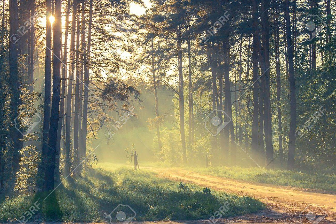 Evening forest with sun and volume light - 20852775