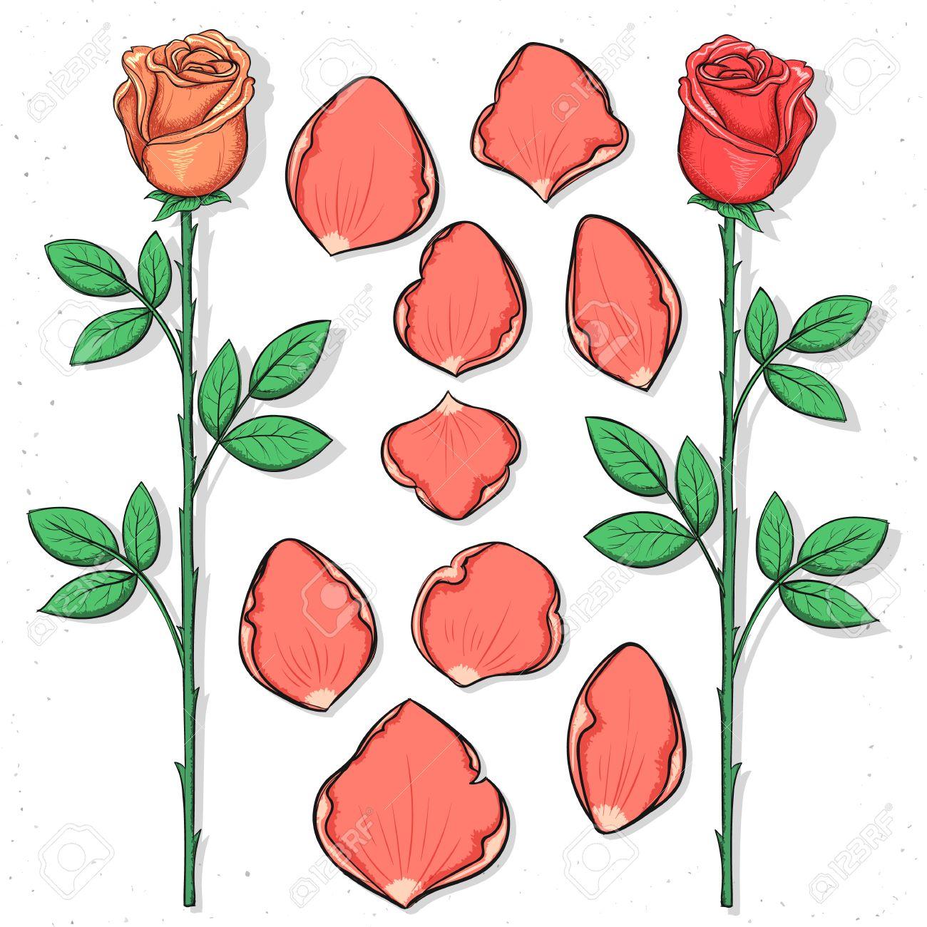 rosa y ptalos aislados hechos a mano en el estilo de dibujo bosquejo de la flor ptalos de rosas para las tarjetas de diseo y carteles