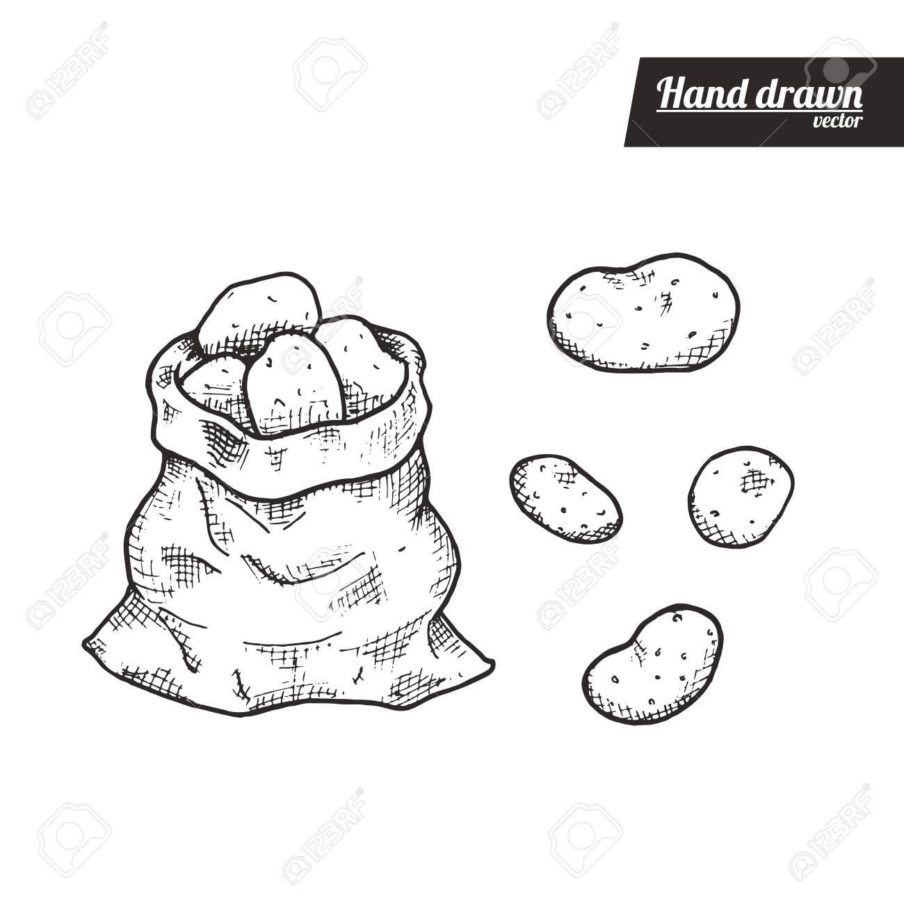Hand drawn sketch style of potato. Vintage eco food vector illustration. Bag of potatos and isolated potato. White background. - 147660875