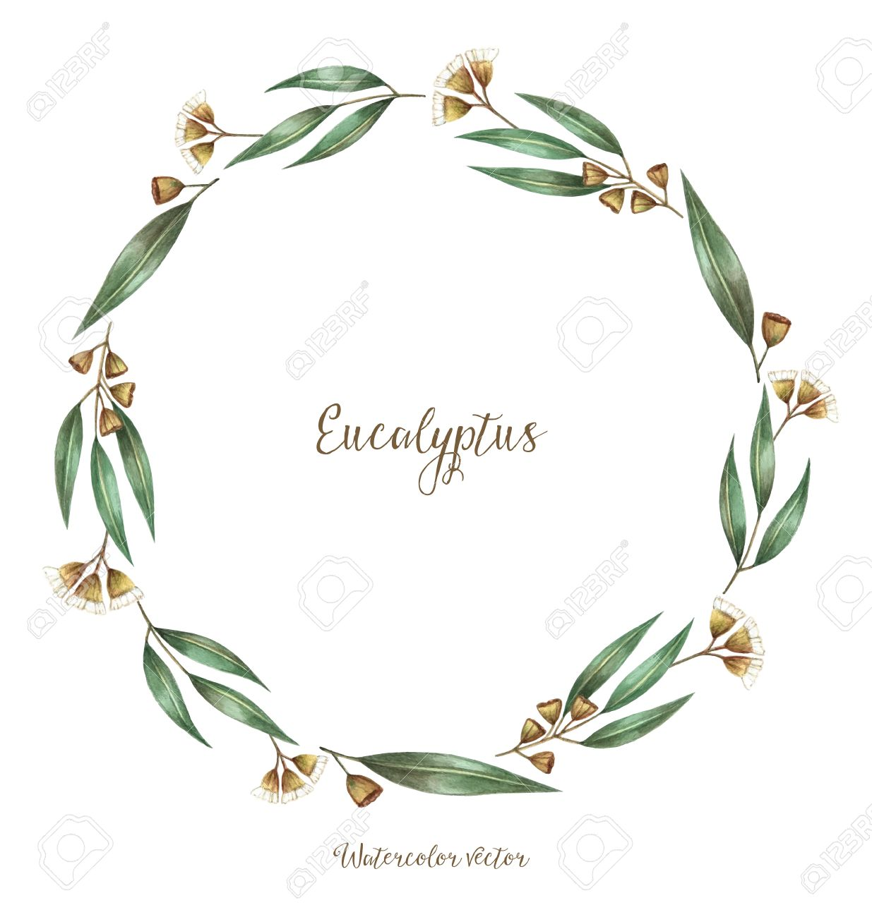 Round frame with decorative branch vector illustration stock - Watercolor Decorative Elements Round Frame Of Eucalyptus Vector Illustration Place For Your