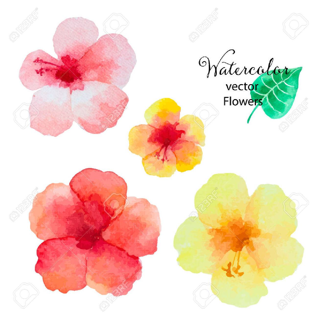 Set Of Watercolor Hibiscus Flowers Isolated On White Background