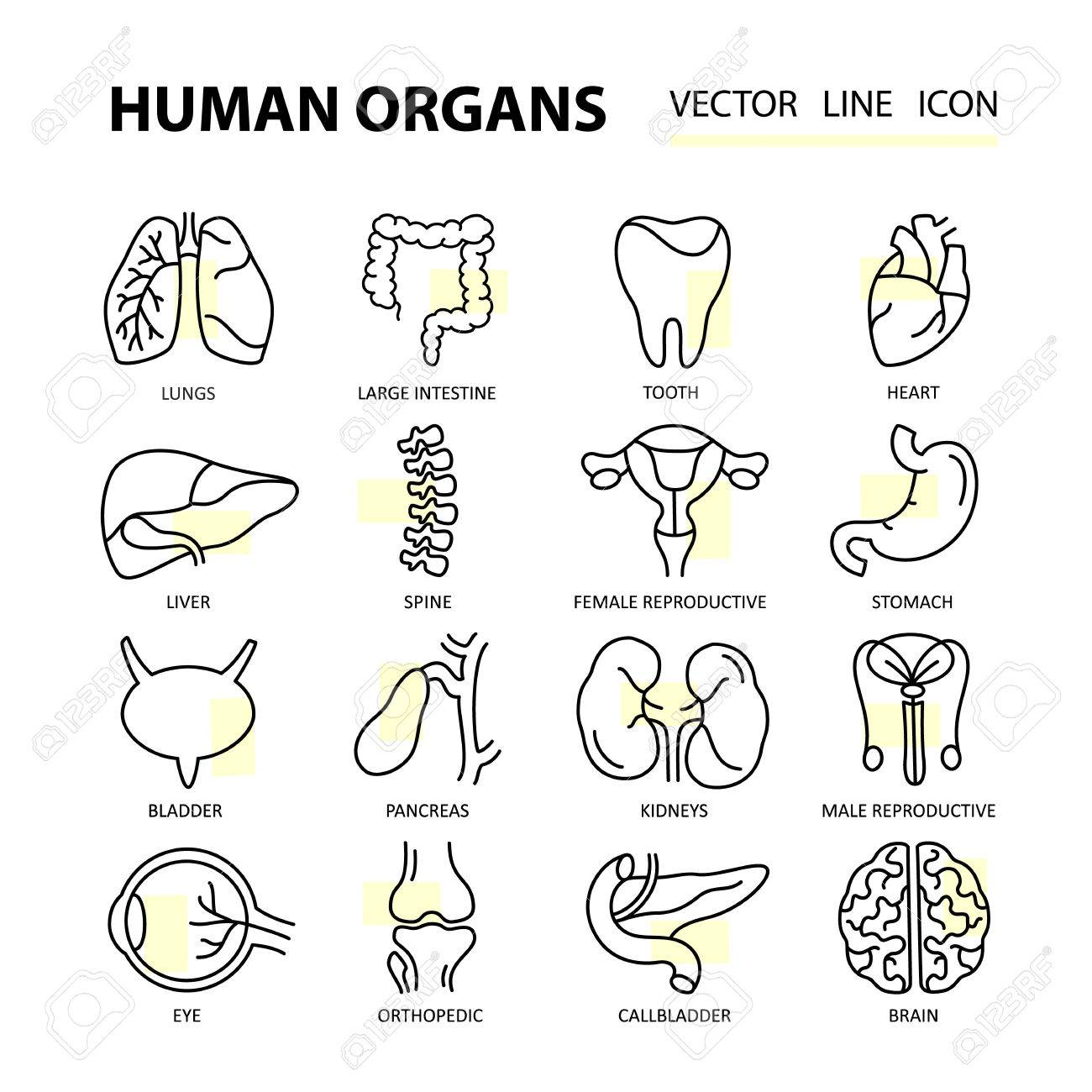 Set Moderne Dünne Linie Web-Symbole Auf Medizin Menschlichen Inneren ...