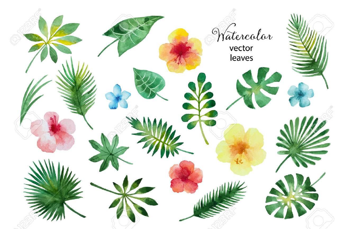 水彩の緑の葉し白い背景イラストにハイビスカスの花が分離されました