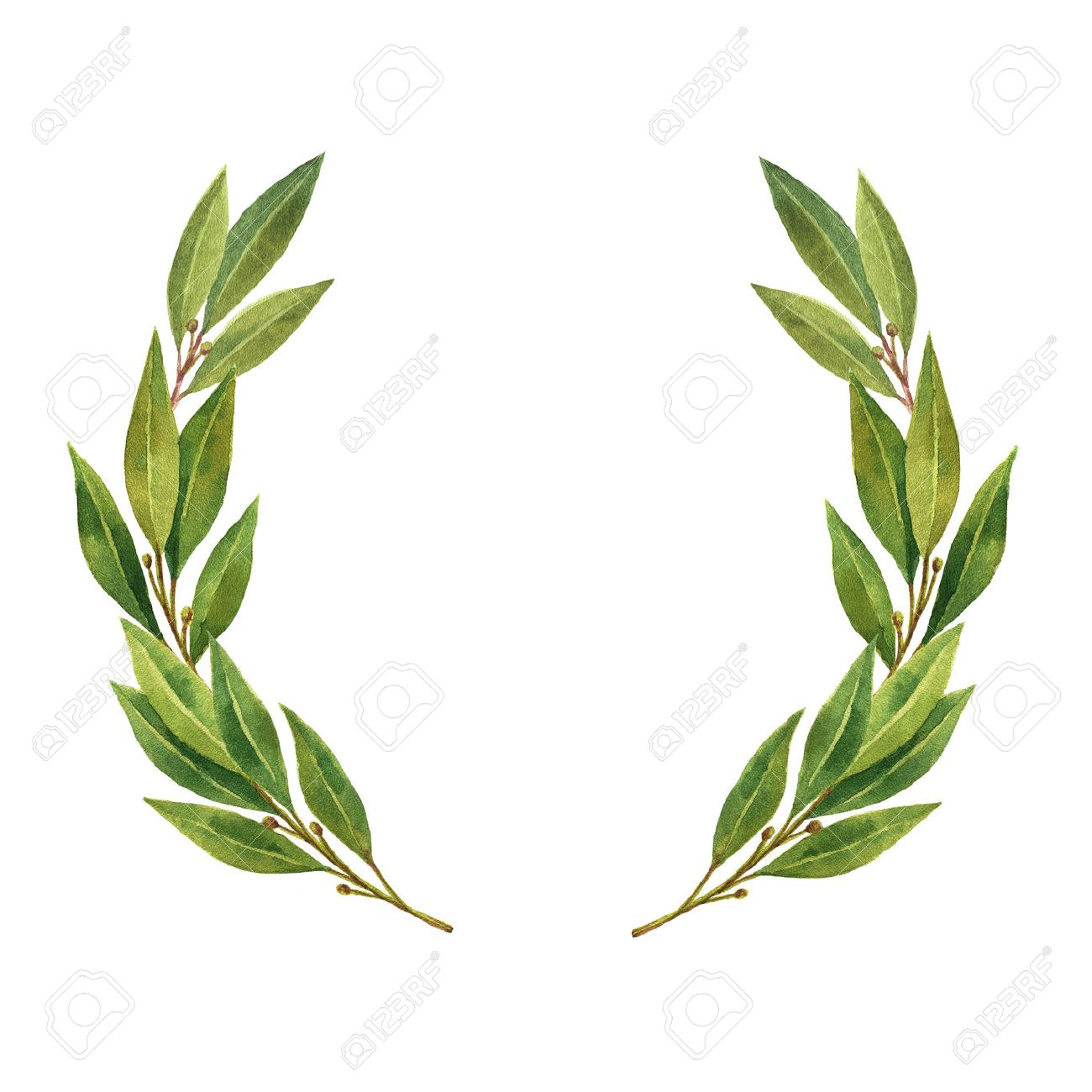 watercolor bay leaf wreath isolated on white background stock photo