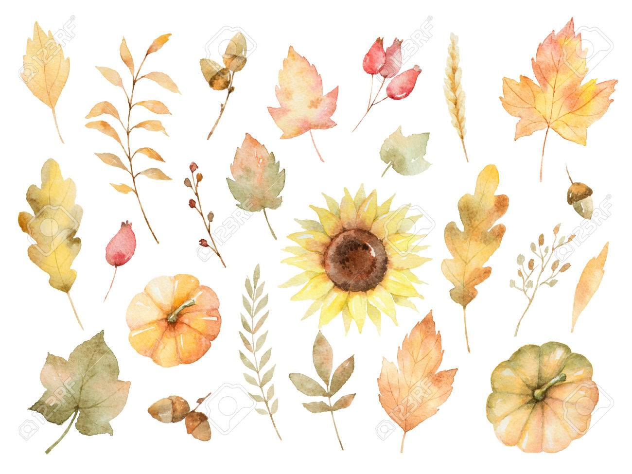 Watercolor autumn set of leaves, branches, flowers and pumpkins isolated on white background. - 82309735