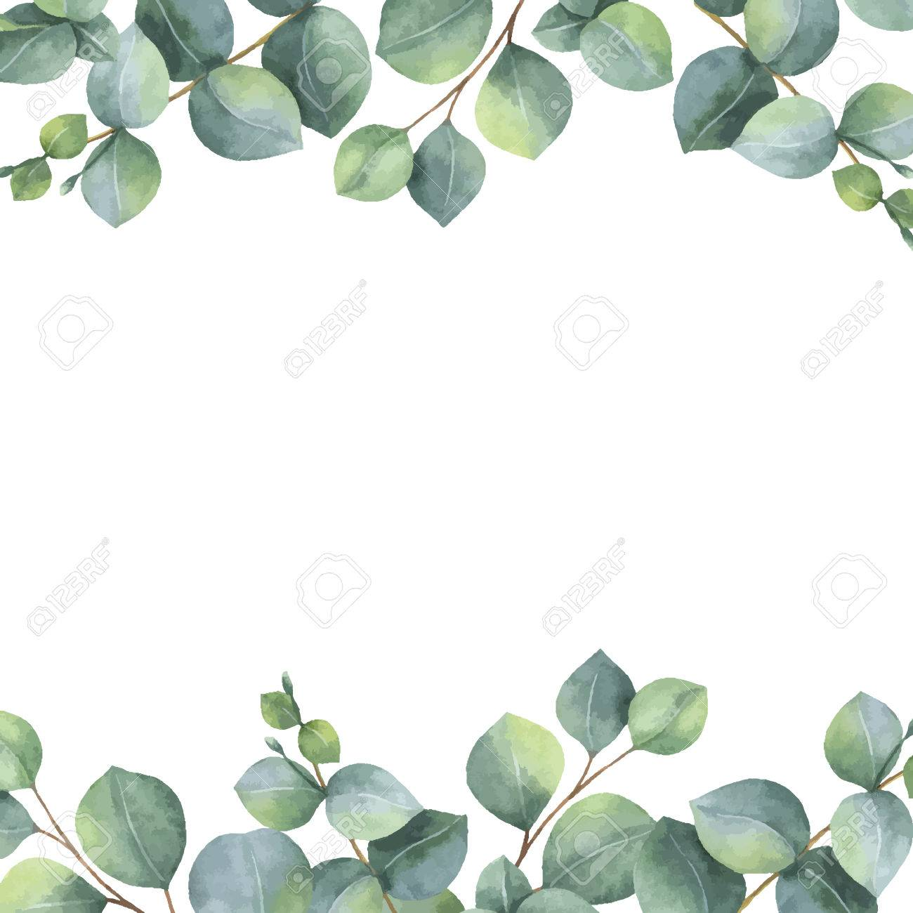 Watercolor vector green floral card with silver dollar eucalyptus leaves and branches isolated on white background. - 85830621