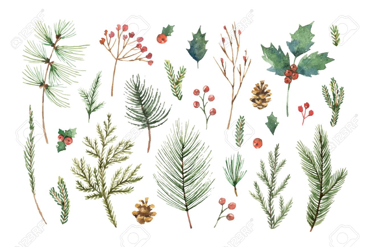 Watercolor vector Christmas set with evergreen coniferous tree branches, berries and leaves. - 88695429