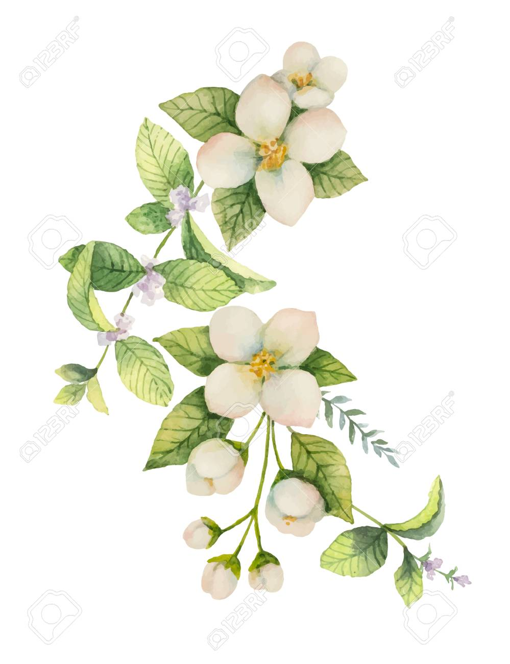 Watercolor vector wreath Jasmine and mint isolated on a white background. - 90368192