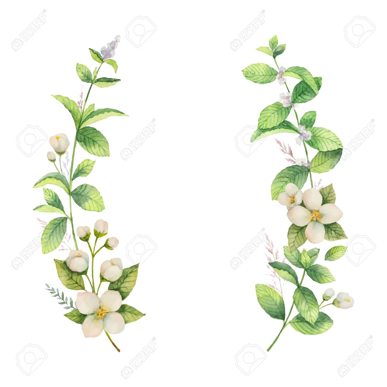 Watercolor vector frame of Jasmine and mint branches on white background. - 90666592