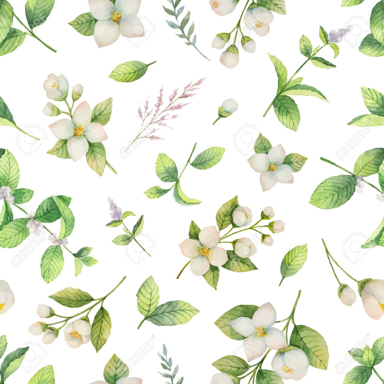Watercolor vector seamless pattern of flowers and branches Jasmine isolated on a white background. - 90666049