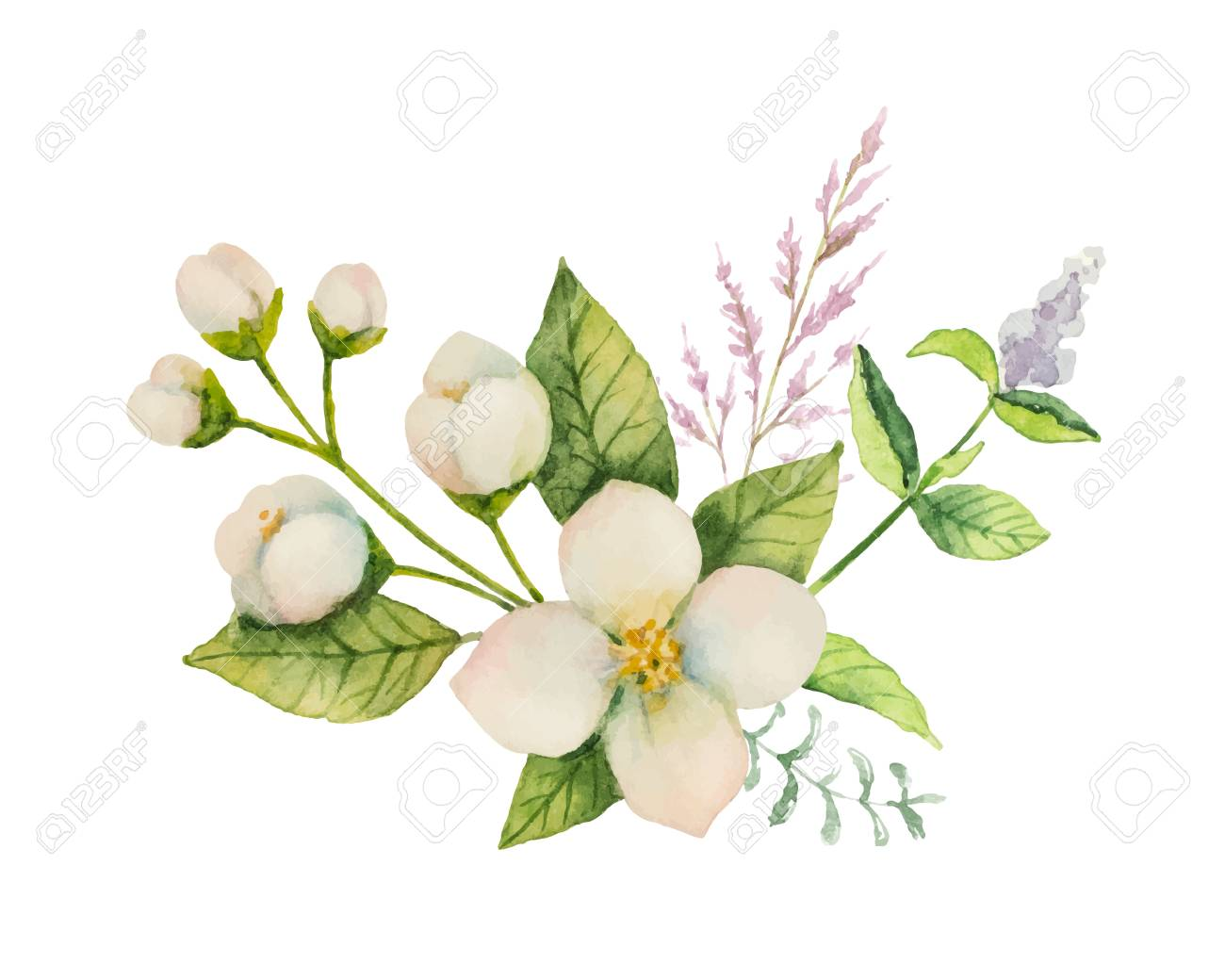Watercolor vector bouquet of Jasmine and mint branches isolated on white background. - 90666063