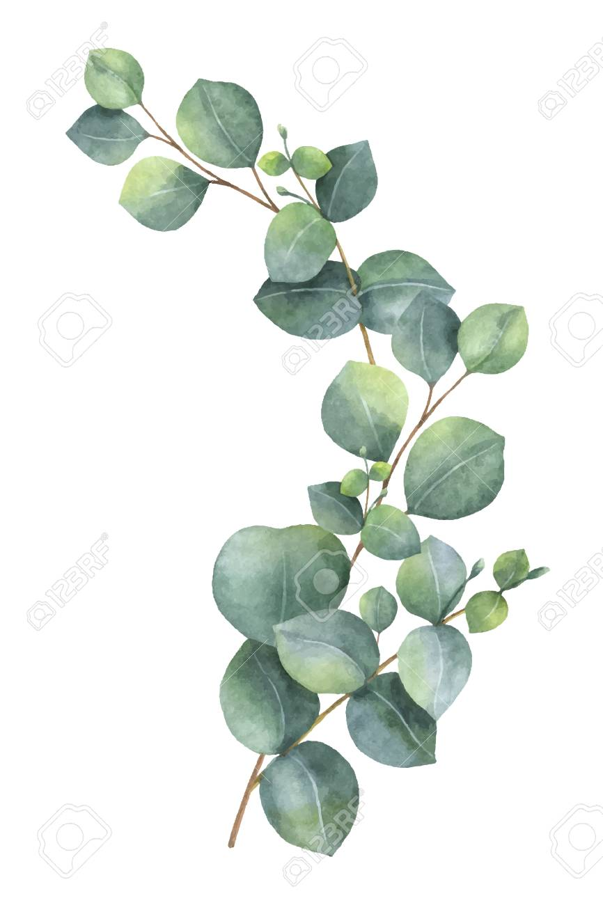 Watercolor vector wreath with green eucalyptus leaves and branches. - 91103667