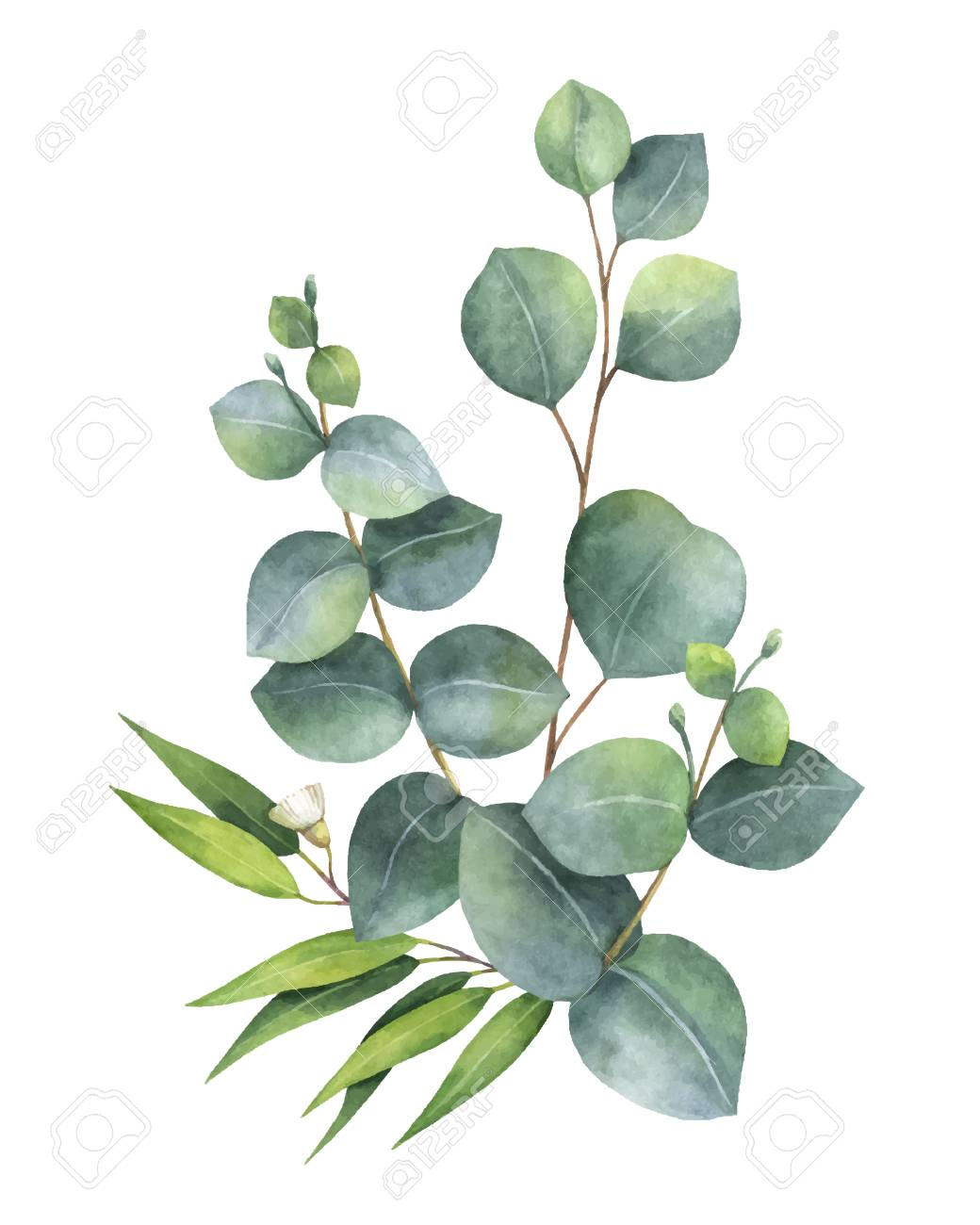 Watercolor vector bouquet with green eucalyptus leaves and branches. Spring or summer flowers for invitation, wedding or greeting cards. - 91104339
