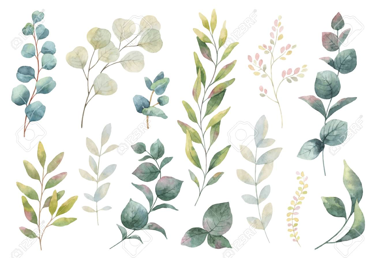 Hand drawn watercolor set of herbs, wildflowers and spices. - 91831762