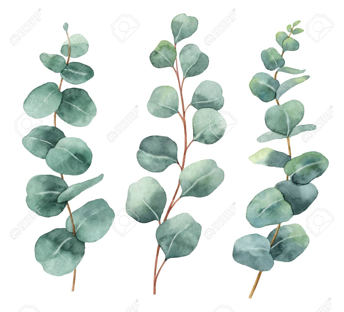 Watercolor hand painted vector set with eucalyptus leaves and branches. Floral illustration isolated on white background. - 92237717