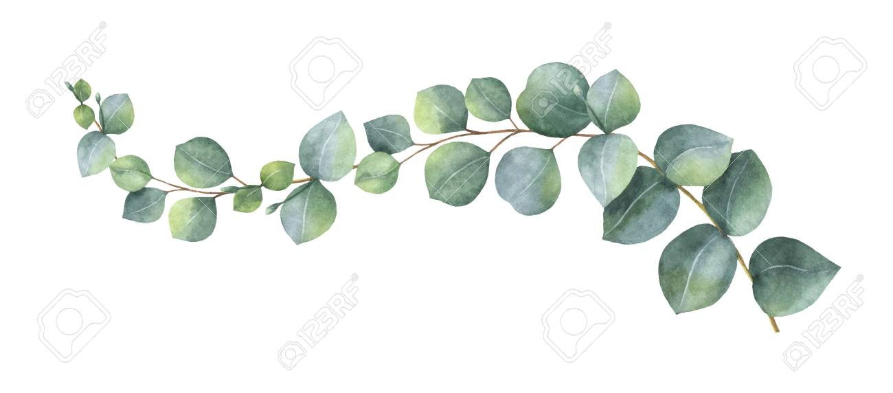 Watercolor vector wreath with green eucalyptus leaves and branches. Spring or summer flowers for invitation, wedding or greeting cards. - 92938838