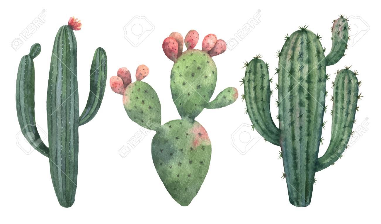 Watercolor Vector Set Of Cacti...