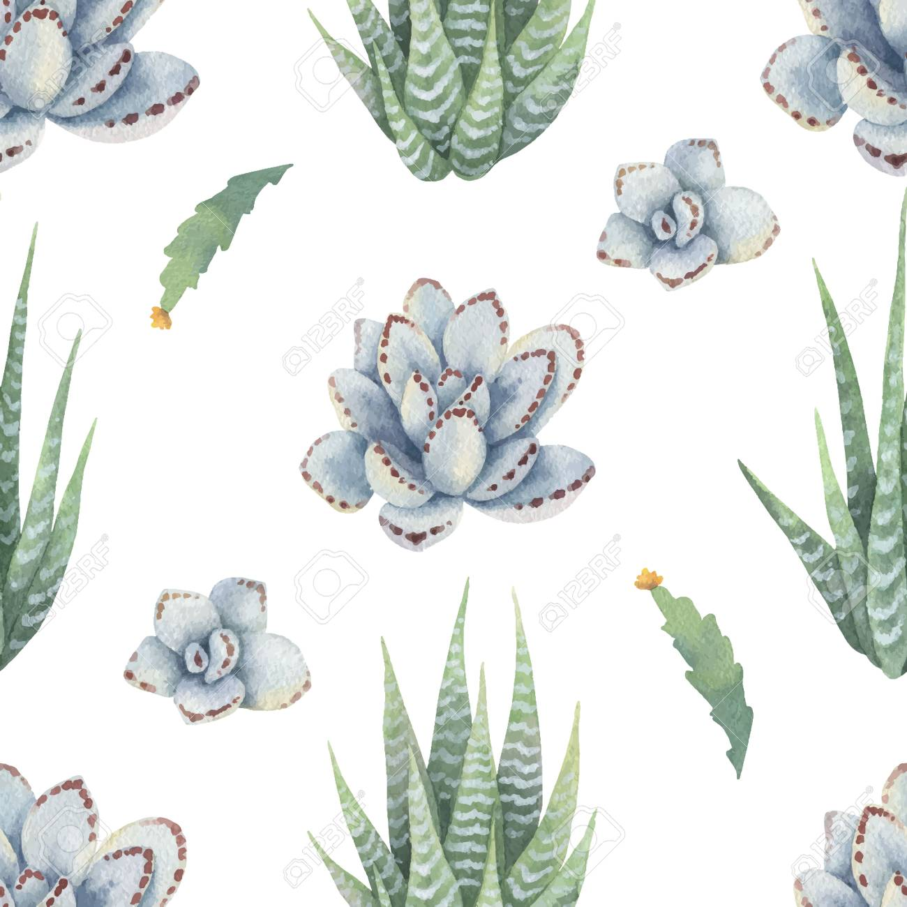 Watercolor Vector Seamless Pattern Of Cacti And Succulent Plants Royalty Free Cliparts Vectors And Stock Illustration Image 95752015