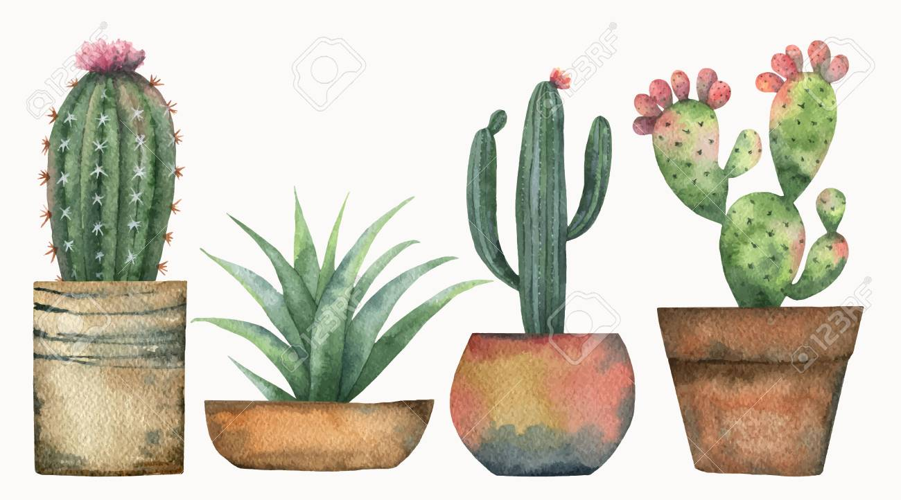 Watercolor vector set of cacti and succulent plants isolated on white background. - 95915051