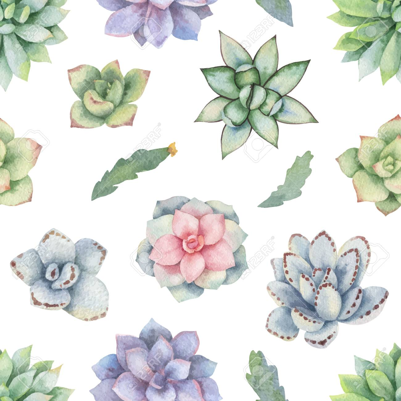 Watercolor Vector Seamless Pattern Of Cacti And Succulent Plants Royalty Free Cliparts Vectors And Stock Illustration Image 96326993
