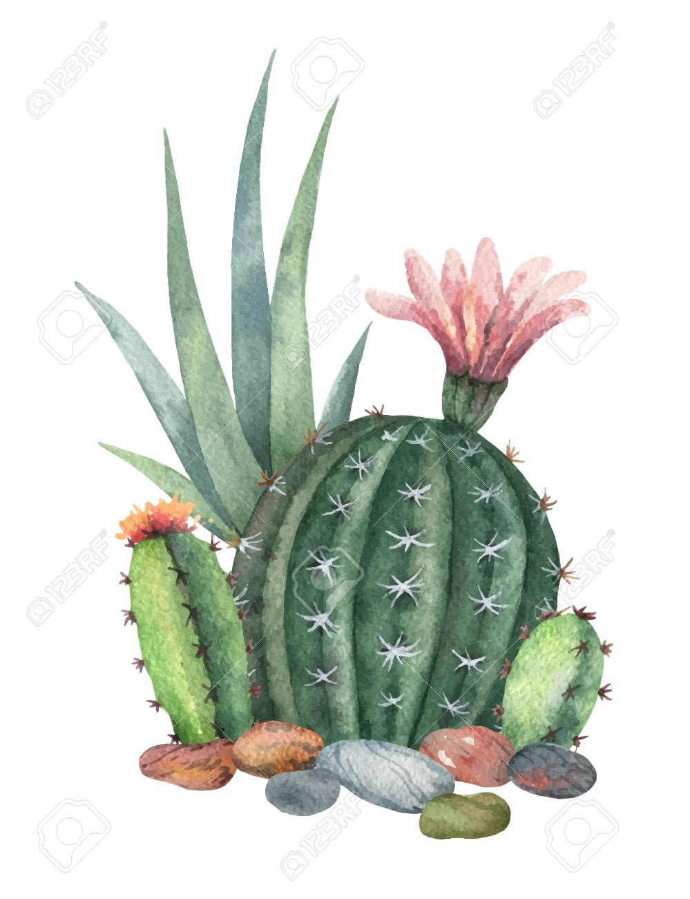 Watercolor Vector Collection Of Cacti And Succulents Plants