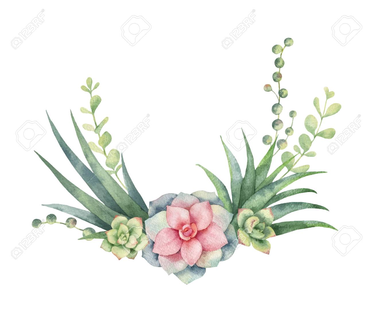 Watercolor Vector Wreath Of Cacti And Succulent Plants Isolated Royalty Free Cliparts Vectors And Stock Illustration Image 98698615