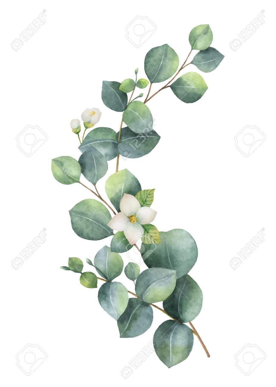 Watercolor vector wreath with green eucalyptus leaves, Jasmine..