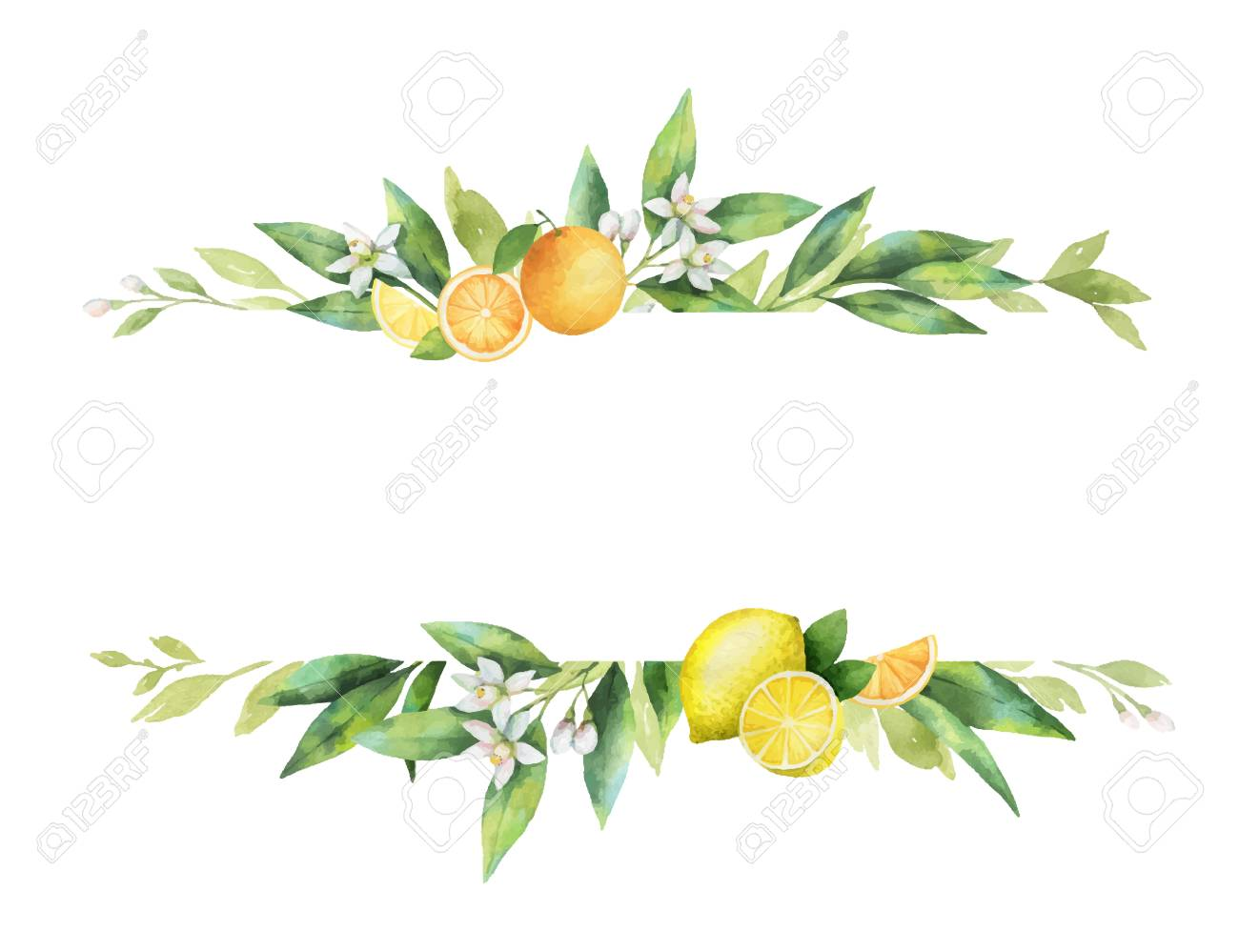 Watercolor vector banner of citrus fruits and leaves. - 101978250
