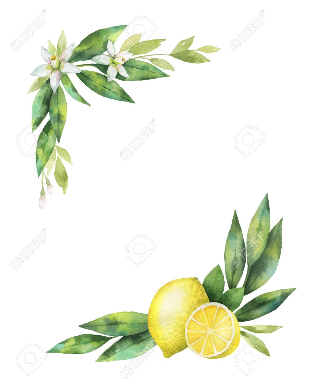 Watercolor vector hand drawn wreath with lemon and leaves. - 102164864