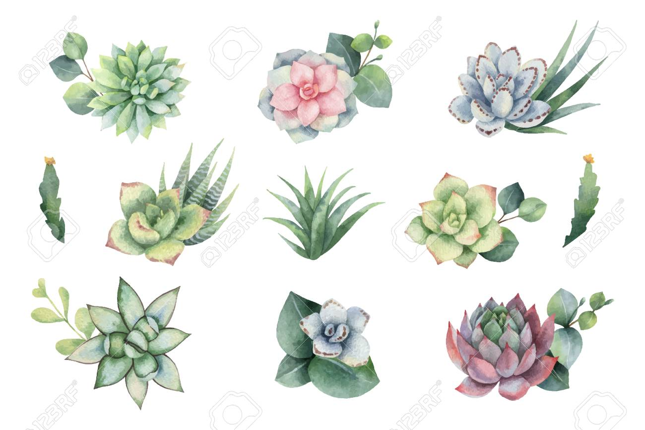 Watercolor vector set with eucalyptus leaves and succulents. Illustration for wedding invitation, save the date or greeting design. Spring or summer flowers with space for your text. - 108112907