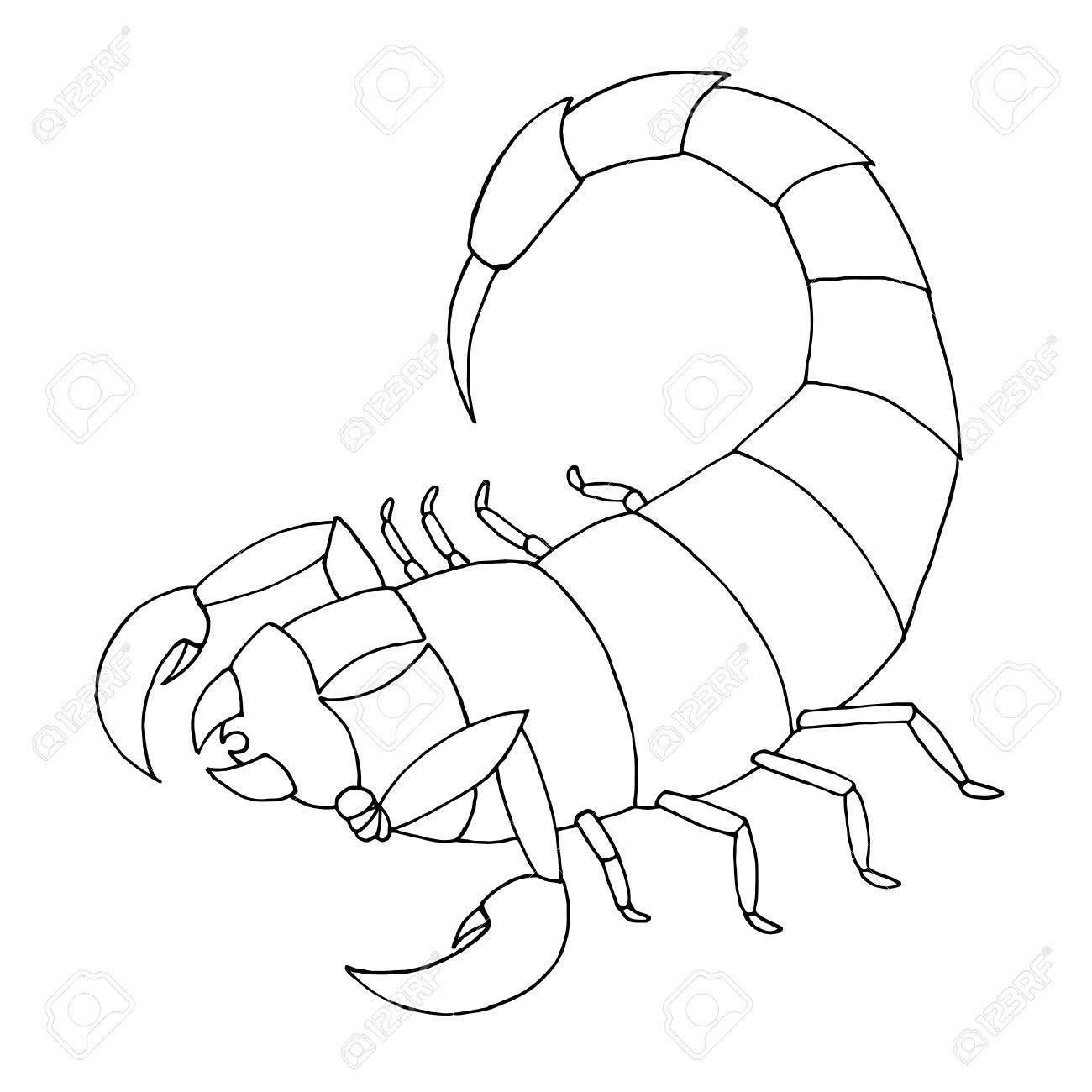 Libro De Colorear De Escorpión Escorpio De Ilustración De Vector
