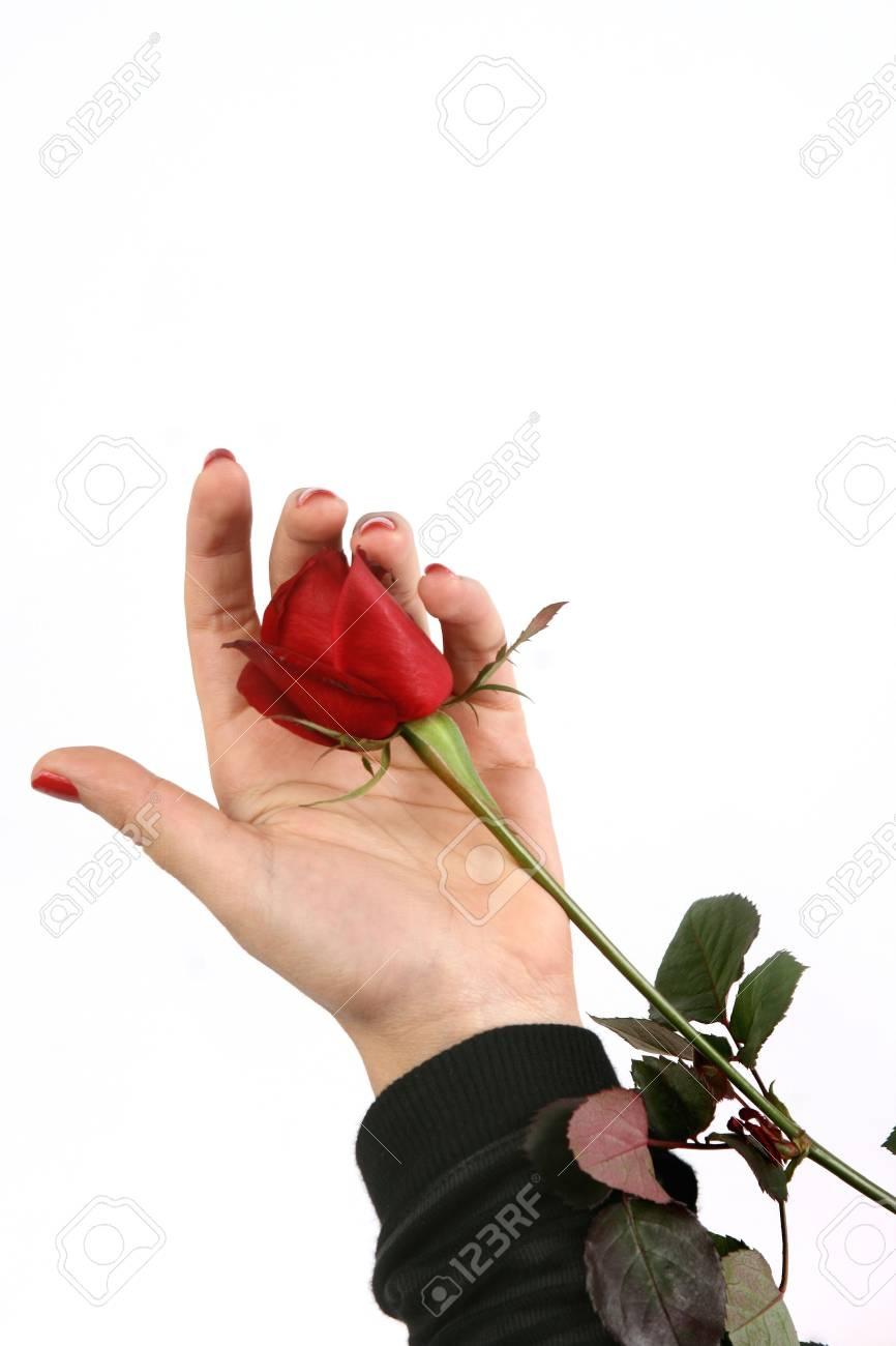 valentine's day Stock Photo - 5503061