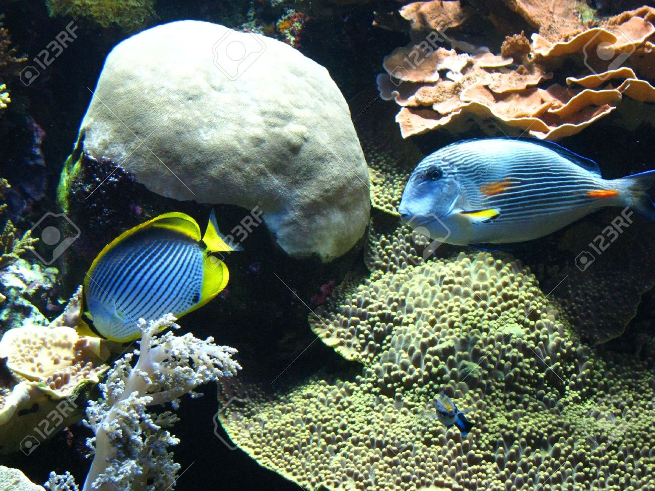 Different types of beautiful fish, molluscs, crustaceans and many kinds of algae, corals in the aquarium of the oceanographic museum in Monte Carlo. Stock Photo - 6392111