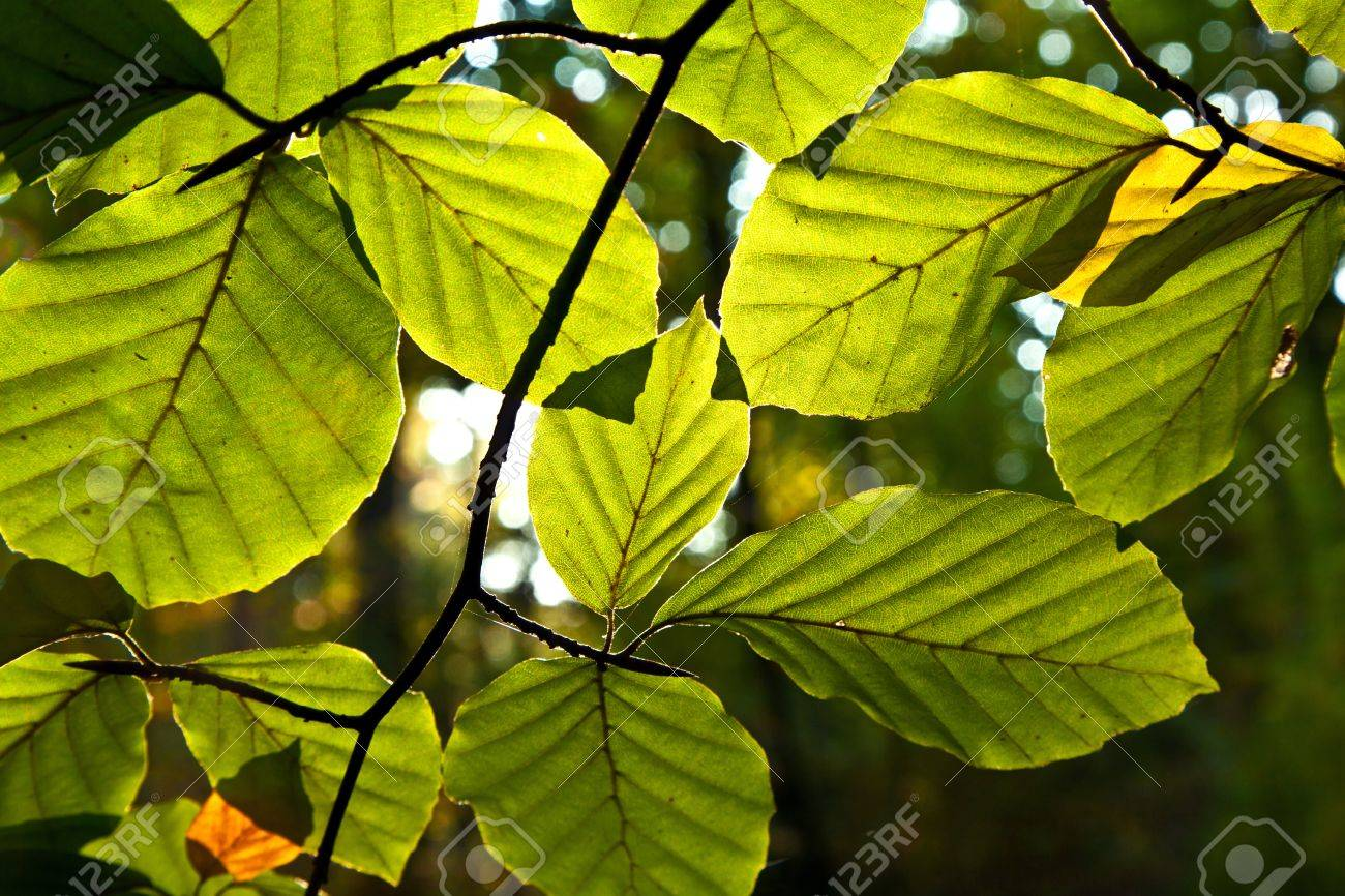 composition of oak leaves in harmony stock photo picture and