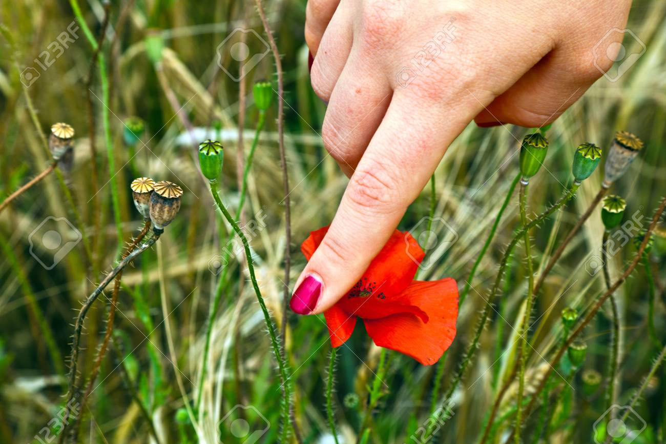 Único Uñas De Flores Tumblr Inspiración - Ideas de Pintar de Uñas ...