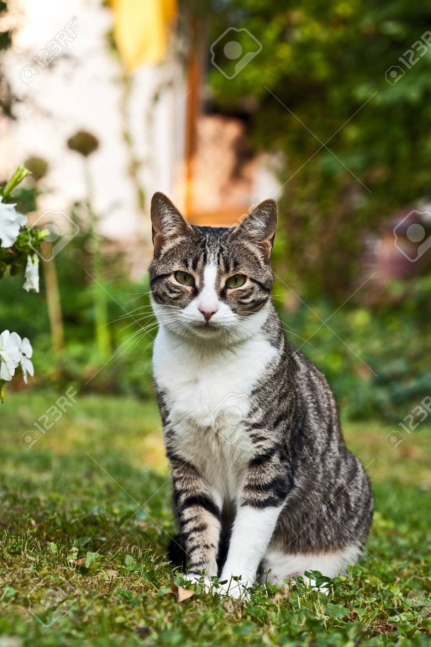 cute cat lying on grass in the garden Stock Photo - 9852164