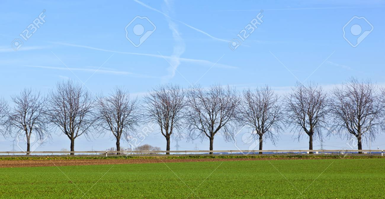 green field with tree alley Stock Photo - 12019098