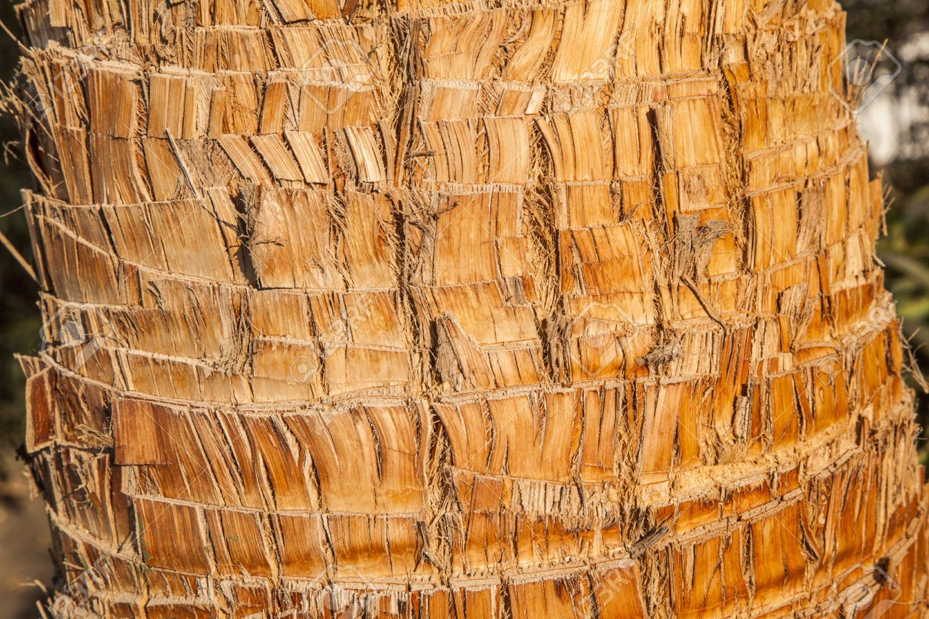 Rough brown palm tree wood bark natural texture background Stock Photo - 13369987