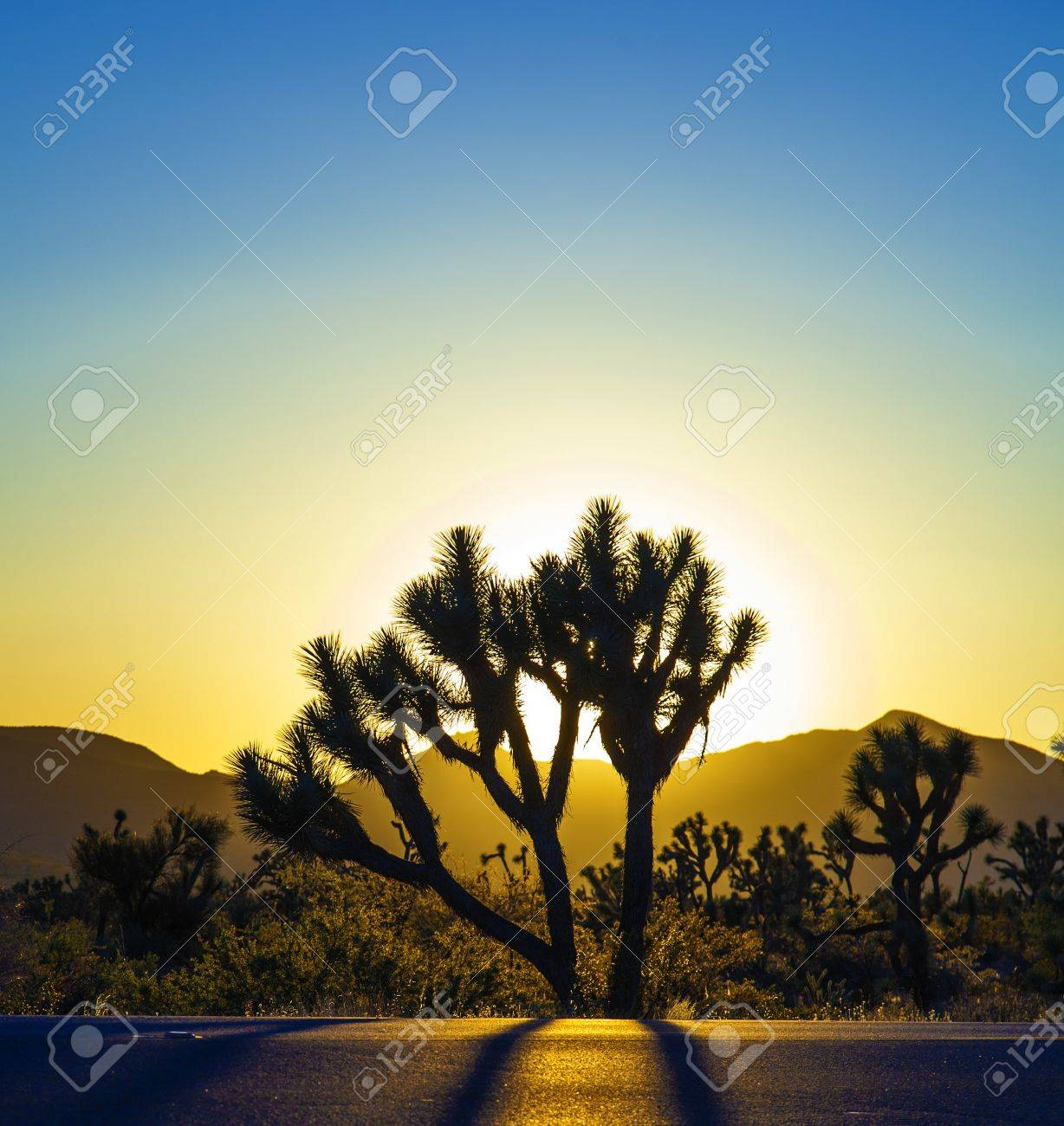 joshua trees with mountains in golden sunset Stock Photo - 14675170