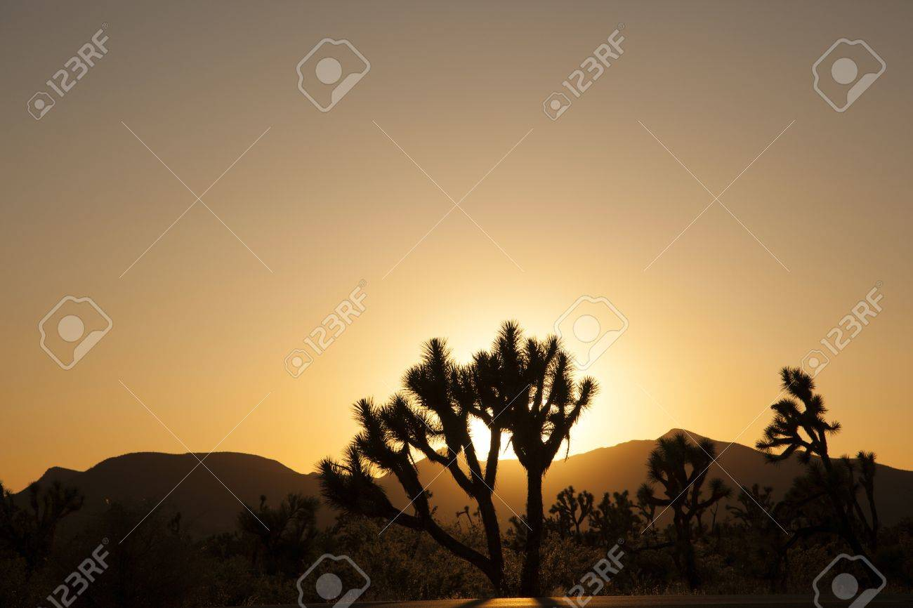 joshua trees with mountains in golden sunset Stock Photo - 14675261