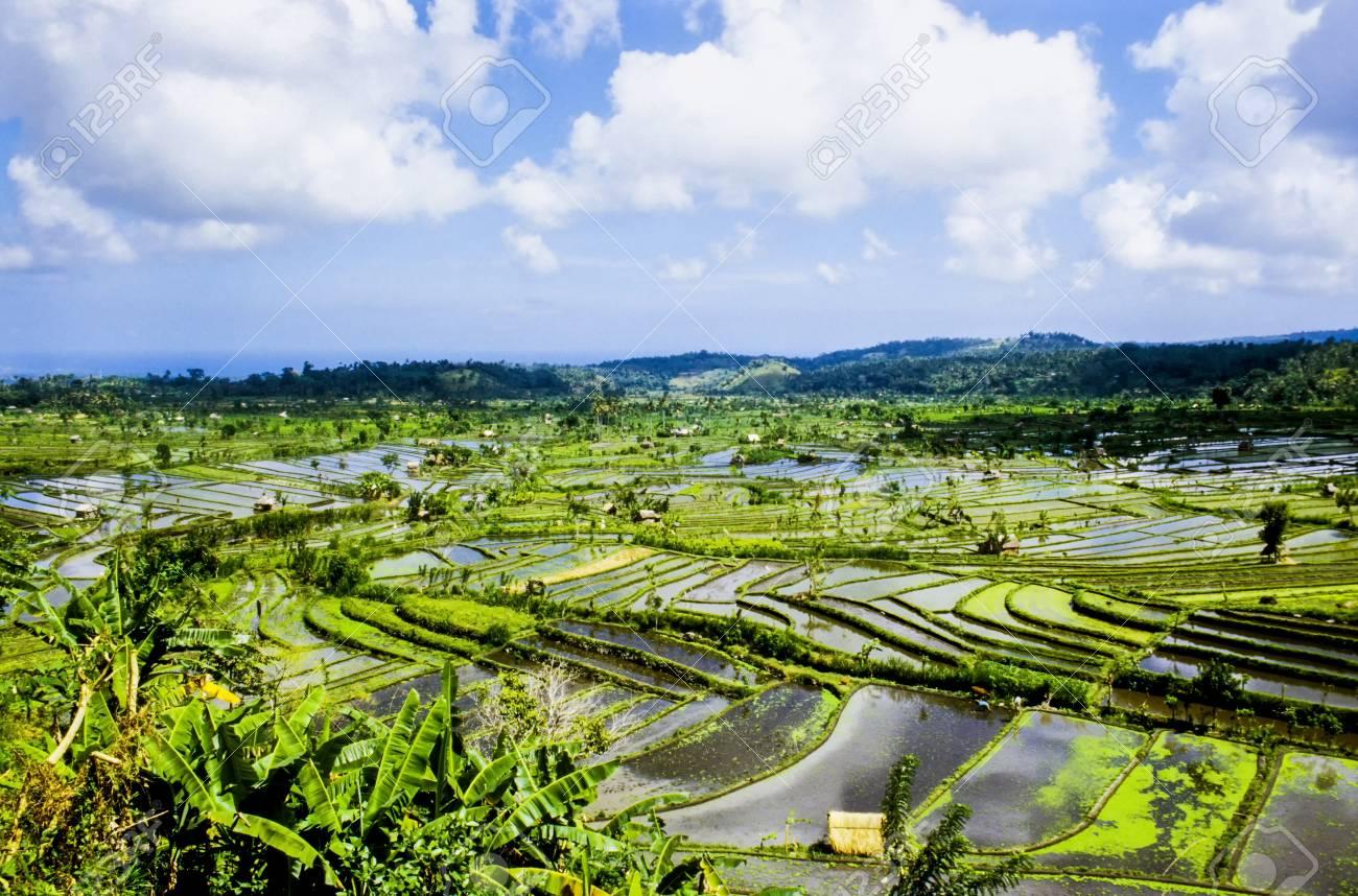 rice terraces in Bali Stock Photo - 16123617