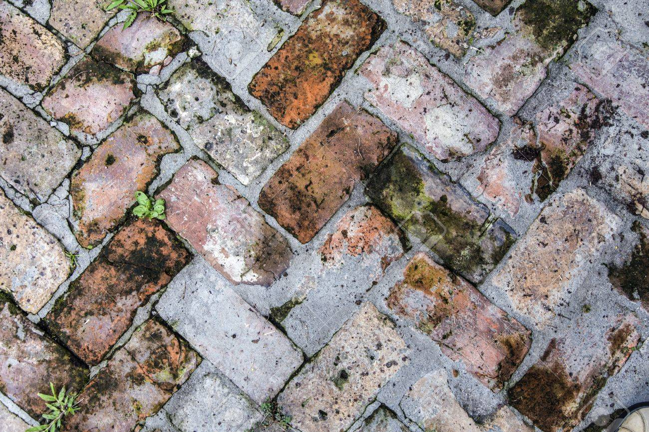 old tiles at the sidewalk with plants in the joints Stock Photo - 21989742
