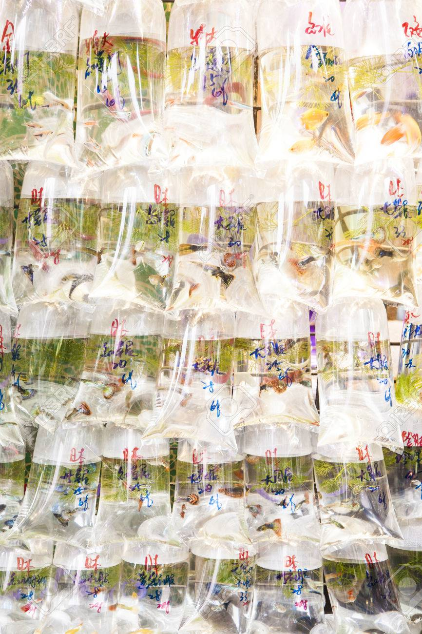 Bags of fishes for sale at a market Stock Photo - 25372998