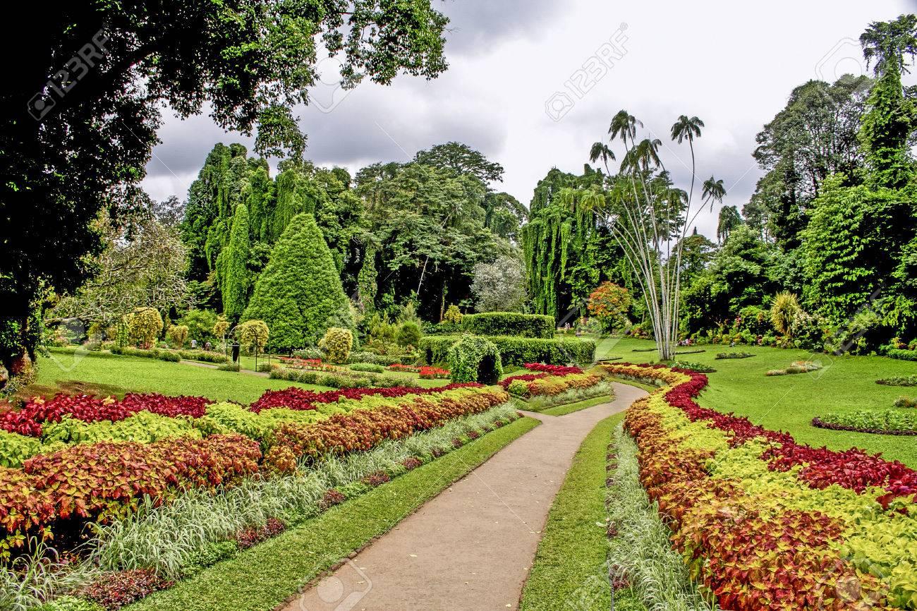botanical Garden of Peradeniya, Kandi - 40635167