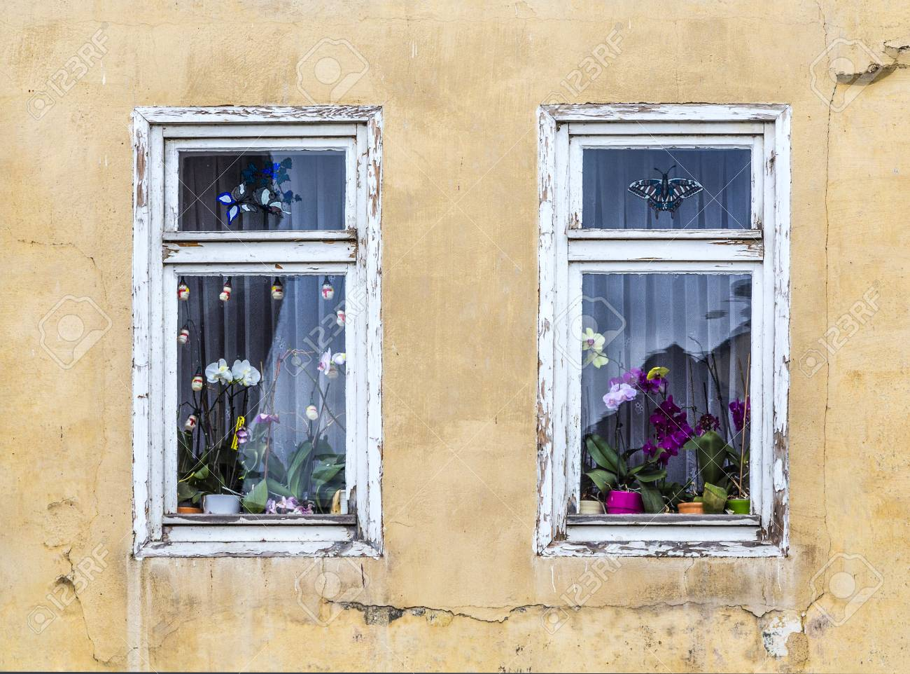 ancienne fenetre avec fleur d orchidee decoration interieure