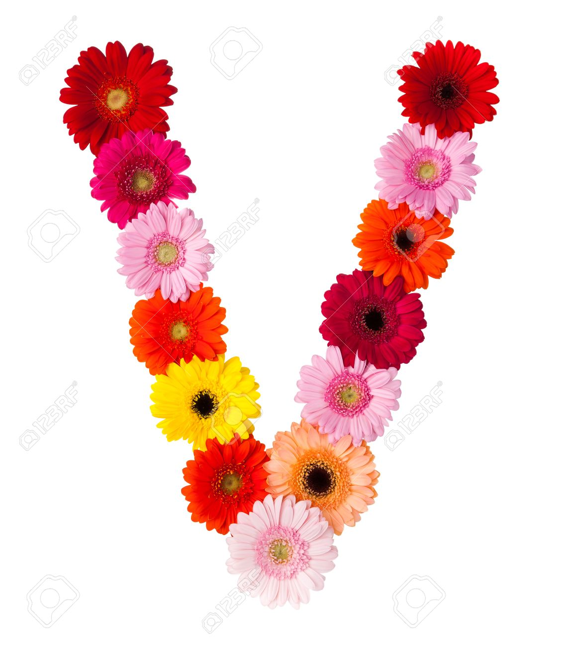 Flower letter v on white background made of gerbera flowers stock flower letter v on white background made of gerbera flowers stock photo 28600964 altavistaventures Choice Image