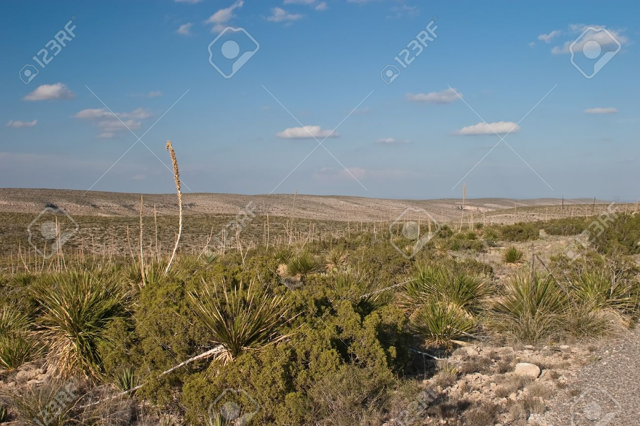 The Living Desert Zoo And Gardens State Park (1,100 Acres) ,.. Stock ...