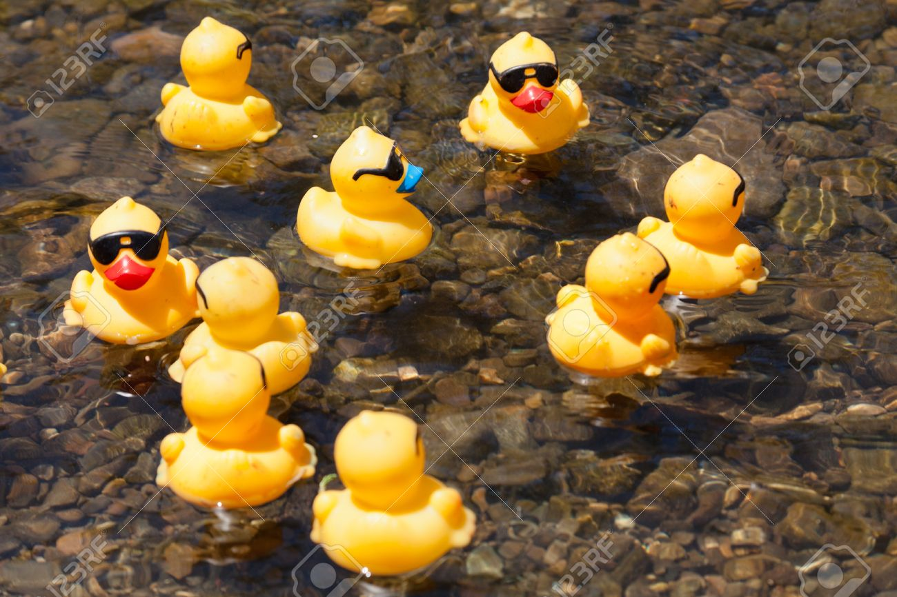 LOS GATOS, CA, USA - JUNE 12: The Rubber Duckies Are Kicking.. Stock ...