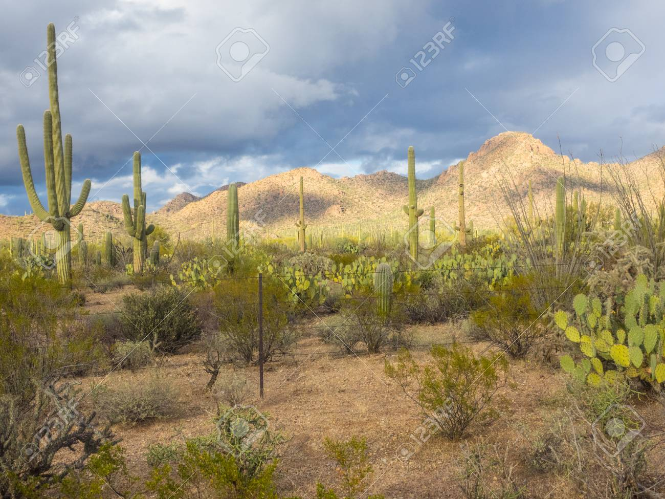 Saguaro National Park Is Located In Southern Arizona On The Outskirts Stock Photo Picture And Royalty Free Image Image 74476558