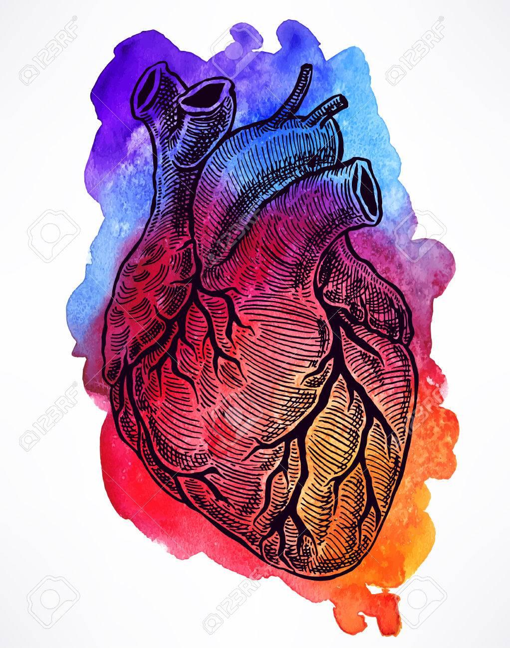 Beautiful human heart on a watercolor background hand drawn beautiful human heart on a watercolor background hand drawn illustration imagens 45842117 ccuart Choice Image